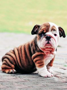 Wrinkly baby.