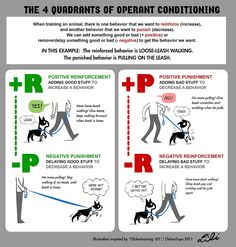 Operant conditioning a great point to understand before moving into any training.
