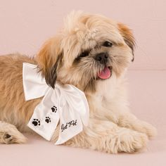 """Your dog is your best friend, your companion, your """"Best Pet!"""". Show them off at the ceremony with this charming wedding bow, designed to attach to your existing collar. This white bow has black text"""