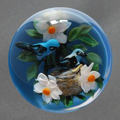 Ayotte, Mountain Blue Birds