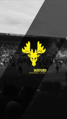 Watford Fc, Eminem Photos, Football Pictures, Graphic Art, Soccer, In This Moment, Club, Wallpaper, Phone