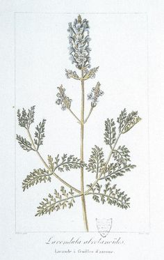 lavanda26-1.jpg (968×1530)