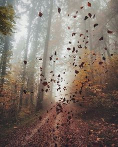 Lost in an Autumn & Winter dream