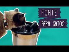 Faça você mesmo uma fonte bebedouro para gatos! Gatos costumam não gostar de…