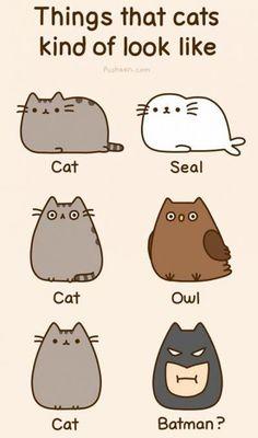 Nyan Cat, Kawaii Pusheen, Pusheen Love, Pusheen Stuff, Fat Cats, Cats And Kittens, Crazy Cat Lady, Crazy Cats, Funny Animals