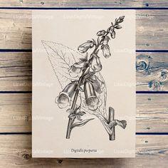 #LizasDigitalVintage Digital Image Foxglove Vintage Botanical by LizasDigitalVintage