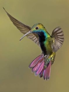 Hummingbird Spirit Animal The hummingbird spirit animal symbolizes the enjoyment of life and lightness of being. Those who have the hummingbird as a totem are invited to enjoy the sweetness of life, lift up negativity wherever Pretty Birds, Beautiful Birds, Animals Beautiful, Cute Animals, Baby Animals, All Birds, Little Birds, Love Birds, Angry Birds