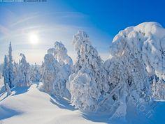Winter Light, Winter Snow, Winter Time, Scandinavian Countries, Landscape Pictures, Winter Landscape, Winter Scenes, Beautiful Pictures, Scenery