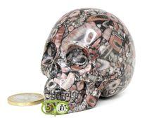 Crinoide Fossiele Kristallen schedel KS-RMIN-101-291   Kristallen schedel   Webshop Danielle Forrer   Mineralen   Klankschalen   Koshi shanti's   Tingsha   Inzichtkaarten   Pendels   etc   Wieringerwerf