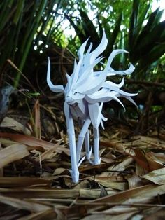 Paper brought to life. The amazing papercraft skills of Richard Wong    Looks like Swicune