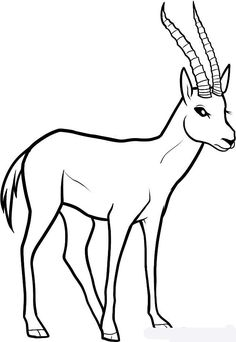 Как нарисовать антилопу Газель - Учимся рисовать