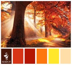 Autumn 2: Brown, Terracotta, Red, Orange, Yellow - Colour Inspiration Pallet