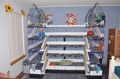 guinea pig c and c cages uk - Would totally have this for the piggies if I had the space!