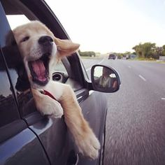 Car ride lover