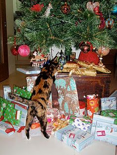 Sweetie: where are my gifts ?