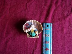 Brown Seashell with Shells and Weeds with Sprinkles Magnet - for sale at Wenzel Thrifty Nickel ecrater store
