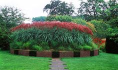 miscanthus-rotesilber