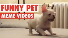 Funny Pet Meme Video Compilation 2016Enjoy these pet memes featuring a dog vs a…