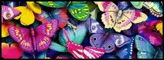 Butterflies Facebook cover photo