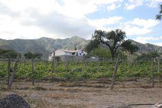 Bodega #Domingo #Molina (Cafayate, #Salta)