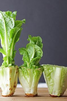 LETTUCE  Take the heart (the part of your Romaine lettuce you didn't eat) and place it in a container with a half inch of water. Give it some rays, and in a few days you'll have new leaves. Could this mean the end of the grocery store forever?