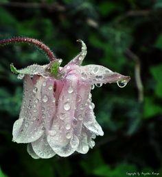 Dew-Drop by Angelika Rempe, via 500px