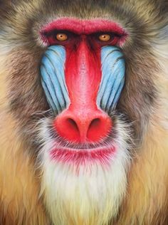 The White Mandrill Primates, Mammals, Animals And Pets, Cute Animals, Curious Creatures, Animal Heads, Cool Pets, Funny Animal Pictures, Exotic Pets