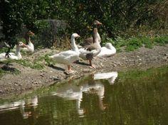 A Day at the Botanical Park of Crete - A Miracle of Cretan Nature! - Crete Blog - Cretico