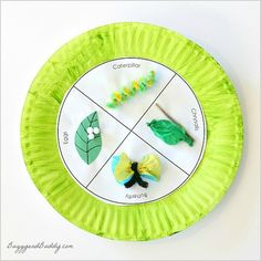 Are you looking for simple crafts for kids with an educational element? Teach them about our beautiful winged friends with this Butterfly Life Cycle Educational Art Craft. This amazing visual shows the stages of how a caterpillar becomes a butterfly.
