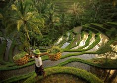 Bali offers it all - paddy fields, volcanoes, tropical humid forest, and sandy beaches with palm and with warm Indian Ocean.