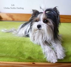 Lily, Dogs, Animals, Animales, Animaux, Pet Dogs, Orchids, Doggies, Animal