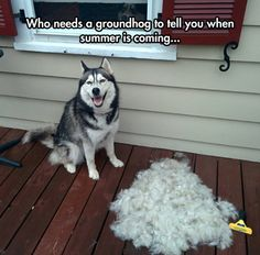 My dog- SO TRUE!! I have a German Shepherd, but it's the same thing.