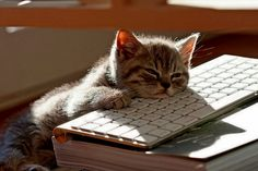 Computer work is a lot more taxing than most people know. #cats