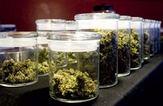WATCH: These Storage Hacks Will Help Your Marijuana Last Longer