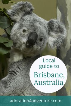 Adoration 4 Adventure's local guide for visitor's to Brisbane, Qld, Australia including top places to eat, drink, stay and how to get around on a budget.