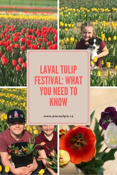 Everything you need to know before going to the Laval Tulip Festival, just north of Montreal. How much does it cost? Can you brings kids or dogs? How do you actually pick the tulips?