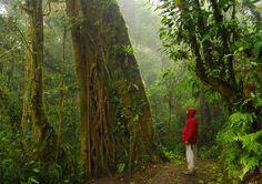 Bosque nuboso tropical de Monteverde, Costa Rica