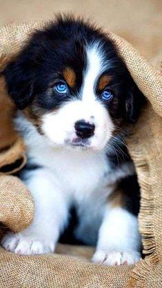 Super Cute Puppies, Cute Baby Dogs, Cute Little Puppies, Cute Dogs And Puppies, Cute Little Animals, Cute Funny Animals, Funny Puppies, Doggies, Puppies Stuff
