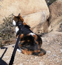 Introducing Your Cat to RV Travel | Take Paws - The official pet travel blog of GoPetFriendly.com