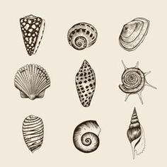 Seashell tattoos are the best designs for those of you who are marine fans and love the aquatic life with no bounds. Read about some of the popular designs of the same in this article.