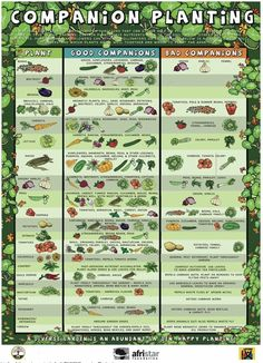 Use this chart to make sure the plants in your garden make good neighbors!