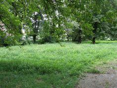 Michalovce - Park 1