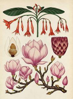 Botanicum. Viaje a través de la botánica con ilustraciones de Katie Scott | El…