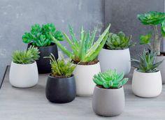 Succulents in sweet little pots make a perfect little garden anywhere Mini Cactus Garden, Cactus House Plants, Balcony Plants, Cactus Flower, Indoor Plants, Indoor Cactus, Cactus Cactus, Potted Plants, Cactus Decor