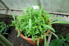 Blumenwichtel von Kleiner Vampir -  Blumenmischung, man sieht schon Cosmea, Ringelblumen und meiner Ansicht nach auch Kokardenblumen