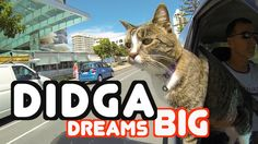 'Didga Dreams Big', A Compilation of Incredibly Impressive Tricks Performed by Didga the Cat