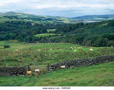 dumfries and galloway landscape, scotland - Stock Image Galloway Scotland, Stock Photos, Mountains, Landscape, Amazing, Travel, Image, Viajes, Trips