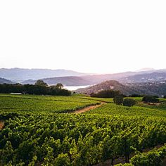 Locals' Guide to the Napa Valley