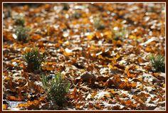Lawenda jesienią #lawendaway #photo #fotografia