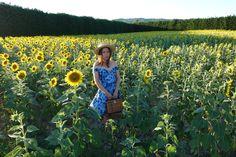 girasoles, provenza, vestido, dress, flores, canotier